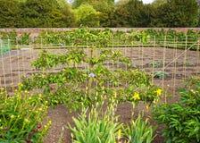 Δέντρο διασκέψεων αχλαδιών στον κήπο κουζινών Audley Στοκ φωτογραφία με δικαίωμα ελεύθερης χρήσης