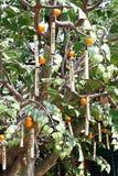 δέντρο ιερέων Στοκ Εικόνες