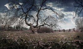 Δέντρο ιτιών από τη λίμνη Στοκ εικόνες με δικαίωμα ελεύθερης χρήσης