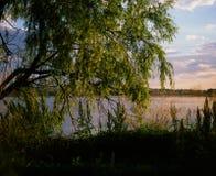 Δέντρο ιτιών από το νερό Στοκ Εικόνα
