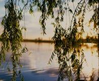 Δέντρο ιτιών από το νερό Στοκ φωτογραφία με δικαίωμα ελεύθερης χρήσης