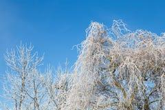 Δέντρο ιτιών με τον παγετό στο υπόβαθρο του μπλε ουρανού παγωμένος χειμώνας Στοκ Φωτογραφίες
