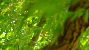 Δέντρο ιτιών που κινείται στον αέρα άγρια φιλμ μικρού μήκους