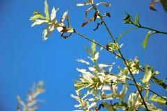 Δέντρο ιτιών Στοκ εικόνα με δικαίωμα ελεύθερης χρήσης