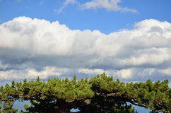 Δέντρο κάτω από τα slkies Στοκ Εικόνες