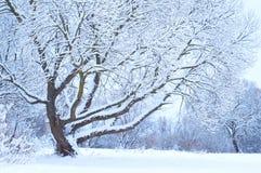 Δέντρο κάτω από το χιόνι Στοκ φωτογραφίες με δικαίωμα ελεύθερης χρήσης