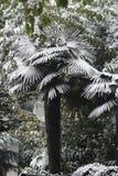 Δέντρο κάτω από το χιόνι Στοκ εικόνες με δικαίωμα ελεύθερης χρήσης