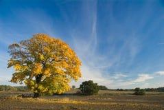δέντρο κίτρινο Στοκ φωτογραφία με δικαίωμα ελεύθερης χρήσης