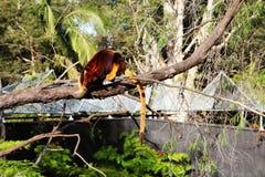 Δέντρο-καγκουρό στο ζωολογικό κήπο Taronga, Syndey Αυστραλία στοκ φωτογραφία