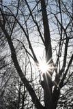 Δέντρο και ήλιος Στοκ φωτογραφίες με δικαίωμα ελεύθερης χρήσης