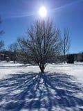 Δέντρο και ήλιος χιονιού Στοκ Φωτογραφίες