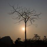 Δέντρο και ήλιος Στοκ φωτογραφία με δικαίωμα ελεύθερης χρήσης
