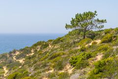 Δέντρο και βλάστηση πέρα από τους απότομους βράχους σε Arrifana Στοκ φωτογραφίες με δικαίωμα ελεύθερης χρήσης