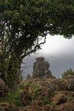 Δέντρο και βράχος Παράξενη ατμόσφαιρα Στοκ εικόνα με δικαίωμα ελεύθερης χρήσης