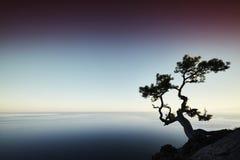 Δέντρο και θάλασσα στο ηλιοβασίλεμα μπλε γυμνός ουρανός τοπίων λόφων της Κριμαίας Στοκ φωτογραφία με δικαίωμα ελεύθερης χρήσης