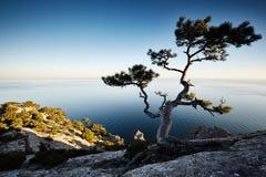 Δέντρο και θάλασσα στο ηλιοβασίλεμα μπλε γυμνός ουρανός τοπίων λόφων της Κριμαίας Στοκ Φωτογραφίες