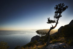 Δέντρο και θάλασσα στο ηλιοβασίλεμα μπλε γυμνός ουρανός τοπίων λόφων της Κριμαίας Στοκ φωτογραφίες με δικαίωμα ελεύθερης χρήσης