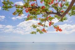 Δέντρο και θάλασσα Στοκ Φωτογραφίες