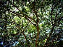Δέντρο και κλάδοι στοκ φωτογραφία με δικαίωμα ελεύθερης χρήσης