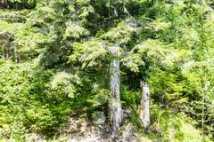 Δέντρο και κολόβωμα Στοκ Φωτογραφία