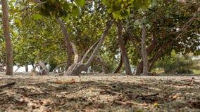 Δέντρο και κορμός από την πορεία στοκ εικόνες