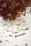 Δέντρο και κόκκινα φύλλα δέντρων στο άσπρο χιόνι στοκ εικόνες με δικαίωμα ελεύθερης χρήσης