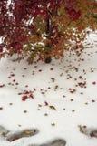 Δέντρο και κόκκινα φύλλα δέντρων στο άσπρο χιόνι στοκ φωτογραφίες