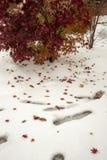 Δέντρο και κόκκινα φύλλα δέντρων στο άσπρο χιόνι στοκ φωτογραφία με δικαίωμα ελεύθερης χρήσης
