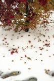 Δέντρο και κόκκινα φύλλα δέντρων στο άσπρο χιόνι στοκ εικόνα με δικαίωμα ελεύθερης χρήσης