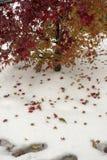 Δέντρο και κόκκινα φύλλα δέντρων στο άσπρο χιόνι στοκ εικόνα