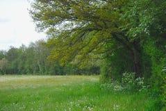 Δέντρο και λιβάδι την άνοιξη Auvergne στοκ φωτογραφίες
