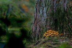 Δέντρο και μανιτάρια φθινοπώρου στοκ εικόνες