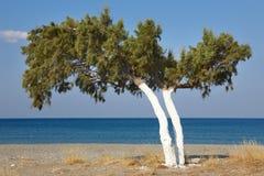Δέντρο και Μεσόγειος στην ανατολή σε Plakias Κρήτη Ελλάδα Στοκ φωτογραφίες με δικαίωμα ελεύθερης χρήσης