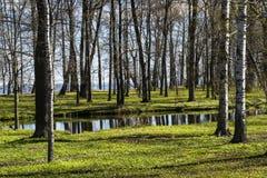 Δέντρο και μικρός ποταμός Στοκ φωτογραφίες με δικαίωμα ελεύθερης χρήσης