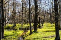 Δέντρο και μικρός ποταμός Στοκ Εικόνες