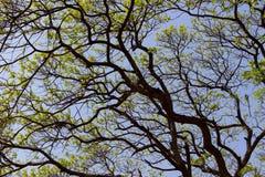 Δέντρο και μπλε ουρανός Στοκ Εικόνες
