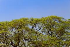 Δέντρο και μπλε ουρανός Στοκ φωτογραφίες με δικαίωμα ελεύθερης χρήσης