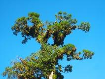 Δέντρο και μπλε ουρανός Στοκ εικόνες με δικαίωμα ελεύθερης χρήσης