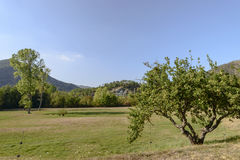 Δέντρο και ξέφωτο της Apple στο αβαείο Croce alla Παναγίας, Tiglieto, Στοκ φωτογραφίες με δικαίωμα ελεύθερης χρήσης