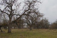 Δέντρο και ομίχλη της Apple Εποχιακό υπόβαθρο Στοκ φωτογραφίες με δικαίωμα ελεύθερης χρήσης