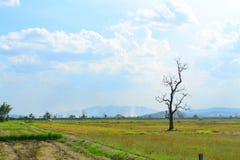 Δέντρο και ουρανός τομέων ρυζιού Στοκ εικόνα με δικαίωμα ελεύθερης χρήσης