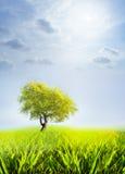 Δέντρο και ουρανός Στοκ εικόνα με δικαίωμα ελεύθερης χρήσης