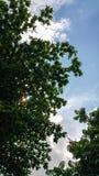 Δέντρο και ουρανός Στοκ Εικόνα