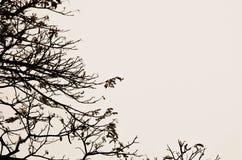 Δέντρο και ουρανός Στοκ Φωτογραφία