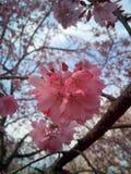Δέντρο και λουλούδι Στοκ φωτογραφία με δικαίωμα ελεύθερης χρήσης
