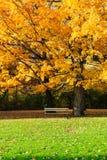 Δέντρο και πάγκος σφενδάμνου Στοκ Φωτογραφίες