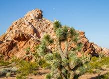 Δέντρο και πέτρα του Joshua στοκ φωτογραφίες