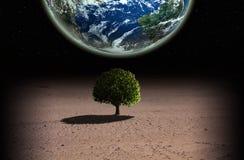 Δέντρο και πλανήτης Στοκ Φωτογραφίες