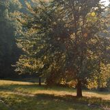 Δέντρο και πορεία στοκ εικόνες με δικαίωμα ελεύθερης χρήσης