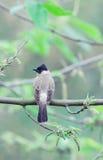 Δέντρο και πουλί Στοκ Φωτογραφίες